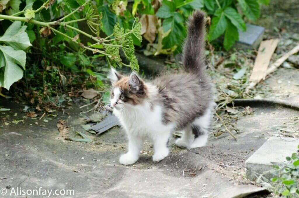 Kitten on Cat Island