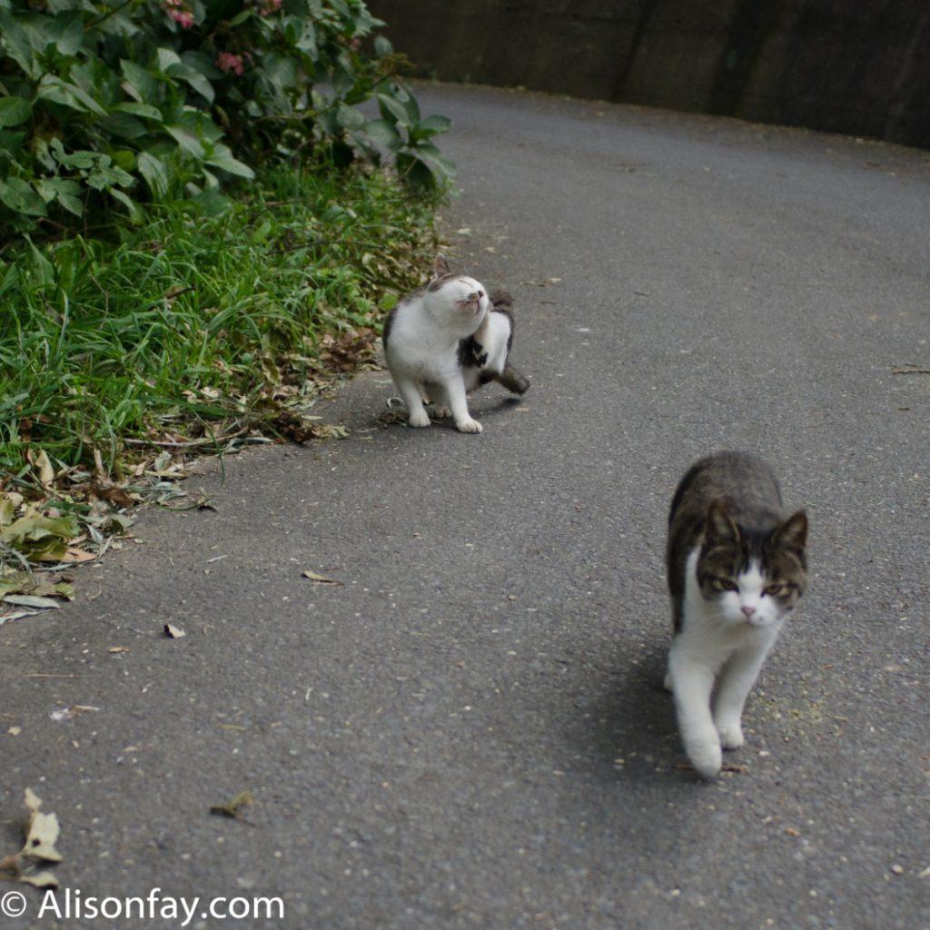 Cats on way to Manga Island