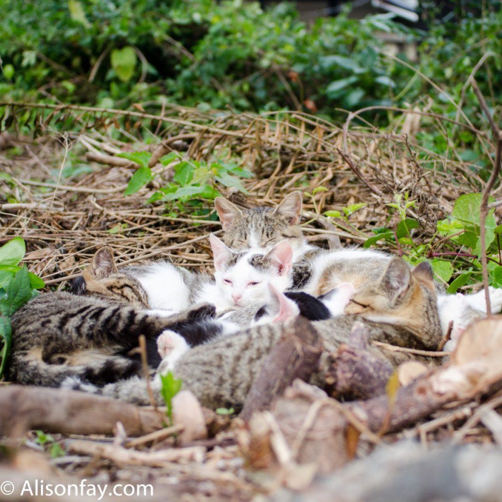 Sleeping cats on cat Island