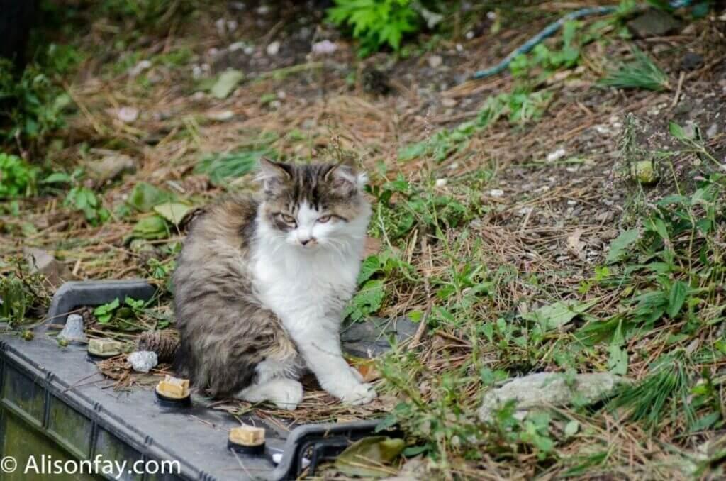 Cats on Cat Island, Japan