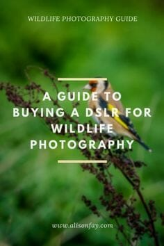 A Guide to Buying a DSLR for Wildlife Photography